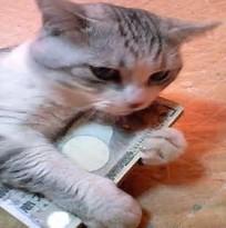 お金を持つ猫