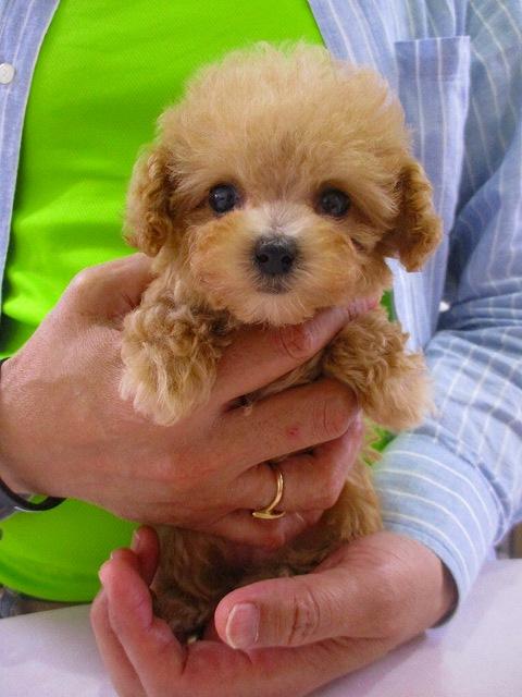 かわいい仔犬